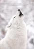 Riserva naturale d'alta montagna: White Howl