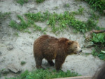 Orso ours - ()