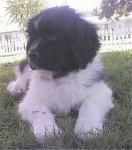 Lupo Bepper - ( (11 mesi))